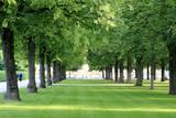 Fototapety Baum Allee im Hofgarten