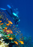 Fototapety Corals, fishes and diver