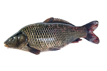 Fish isolated