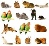 Fototapety illustration animalière