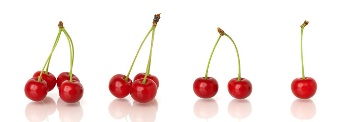 Sour cherries - one, two, three, four