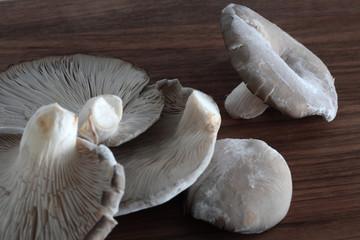 Austernpilze auf braunem Holz