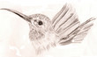 Sketch of a hummingbird, looking proudly to one side