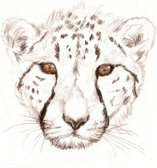 Colored Pencil Sketch of a Cheetah