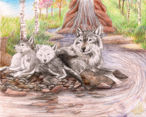 Family of wolves sitting by a dirty stream