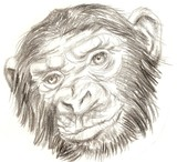 Black and white sketch of a gorilla monkey