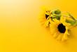 カラー: 黄