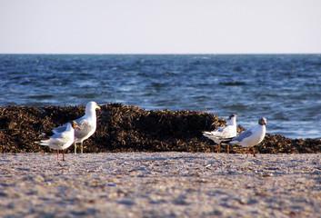 a seagulls