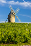 vineyards with windmill, Chénas, Beaujolais, Burgundy, France poster