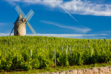 vineyards with windmill, Chénas, Beaujolais, Burgundy, France