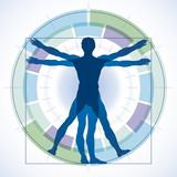 Menschliche Proportionen - Lebenssegmente