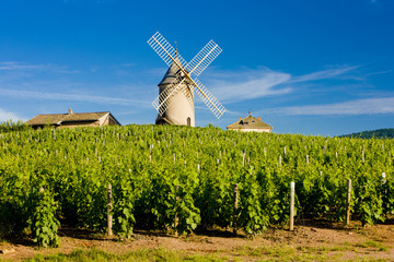 vineyards with windmill,  Chénas, Beaujolais, Burgundy, France