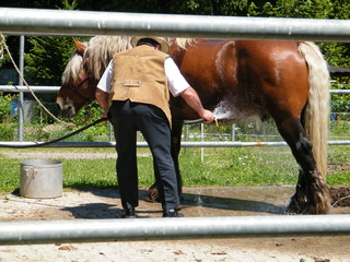Cooling the Cart Horse