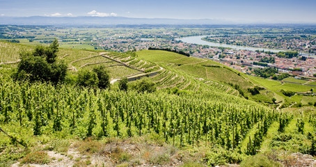 grand cru vineyard, Tain-L´Hermitage, Rhône-Alpes, France