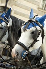 City horses