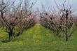 Frutteto - Friuli