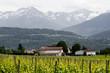 Vignes en Savoie