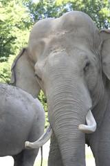 9573 - Asiatischer Elefantenbulle