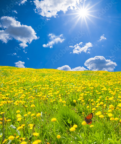 Leinwandbild Motiv Blumenwiese
