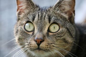 aufmerksame Katze