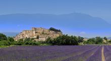 Lavender Grignan