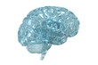 Glass 3D view of the human brain