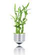 bambù lampadina