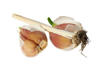 Germinating garlic on a white background. (isolated)