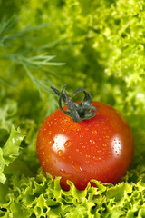 Fresh tomato with fennel on salad leaves