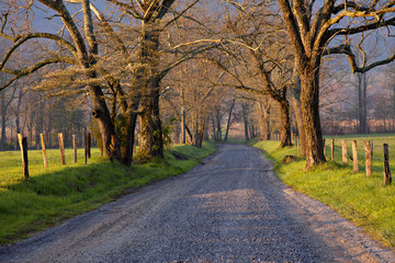 Beautiful un-paved country road lined with large trees