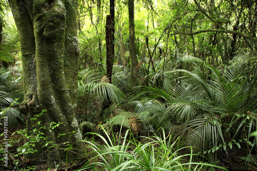 Tropical forest - 14870563