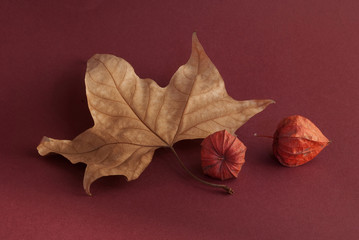 Still life with leaf and physalis