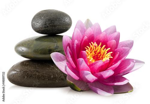 Foto op Aluminium Lotusbloem Fleur de lotus et galets zen
