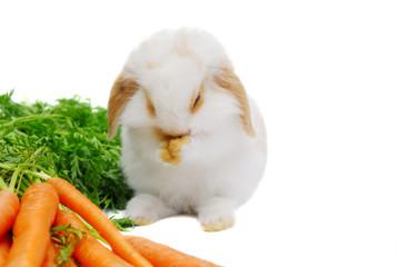 rabbit praying