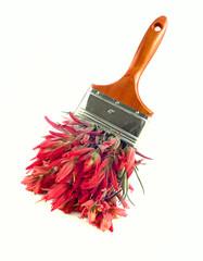 Red wildflower paintbrush