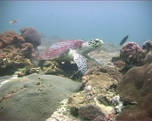 Turtle Scratching Itself