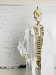 Skeleton in lab coat in front of whiteboard