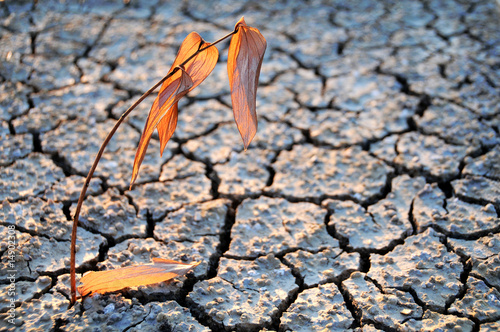Papiers peints Secheresse siccità