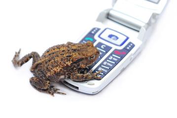 frog phone 2