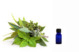 Herbs for Healing poster