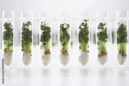Cress seedlings growing in test tubes