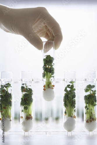 Person holding test tube containing cress seedlings