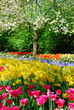 springflowers in keukenhof holland