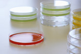 Red petri dish with others