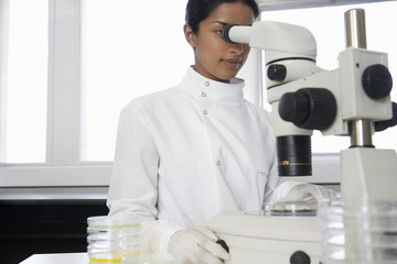 Female lab worker adjusting microscope, examining petri dish