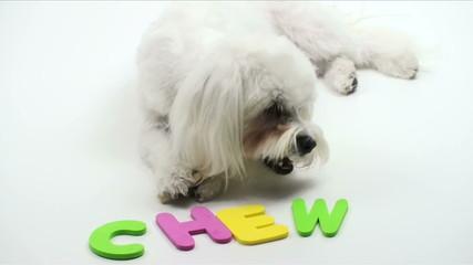 1080 Puppy chew