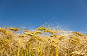 korn land