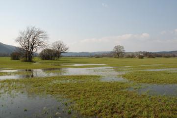 Wetland Near Planina