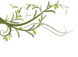 olive tree, vector illustration in green