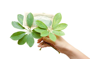 The female hand holds leaves and dollar